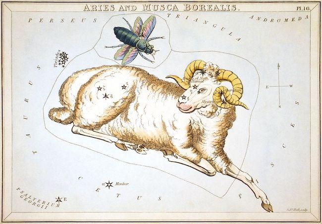 Ilustrasi Aries dan Musca Borealis yang dimuat dalam Urania Mirror dan diterbitkan tahun 1825. Kredit: Sidney Hall.