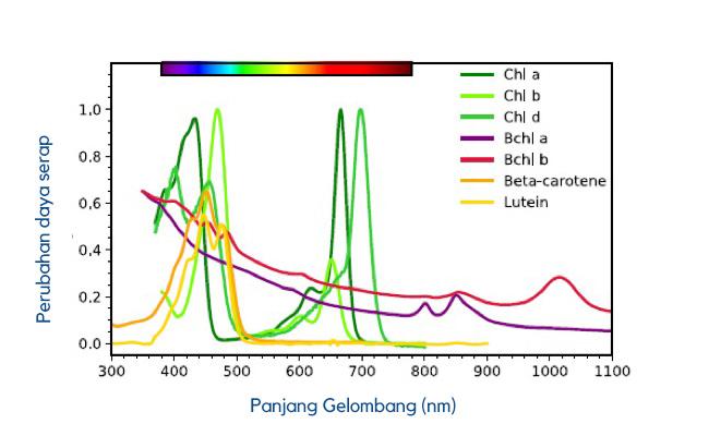 Gambar 2. Spektrum absorpsi beberapa pigmen penyerap cahaya. Sumber: VPL Biological Pigments database
