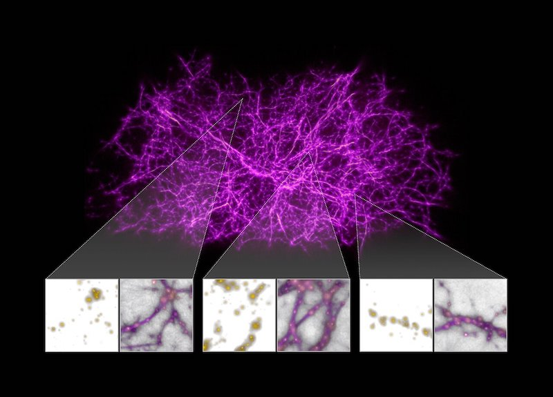 Peta jaringan kosmis. Kredit: NASA, ESA, dan J. Burchett dan O. Elek (UC Santa Cruz)
