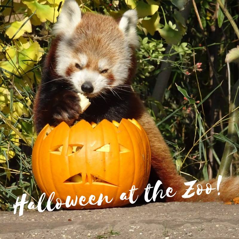 Boo at the Zoo - Halloween Attractions in Langley