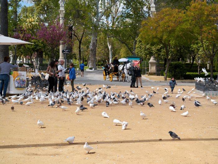 Парк Марии Луизы, Севилья