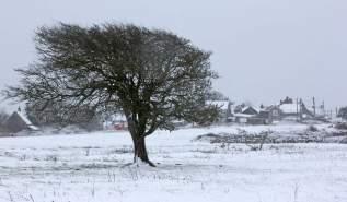Winter 2013 Acton