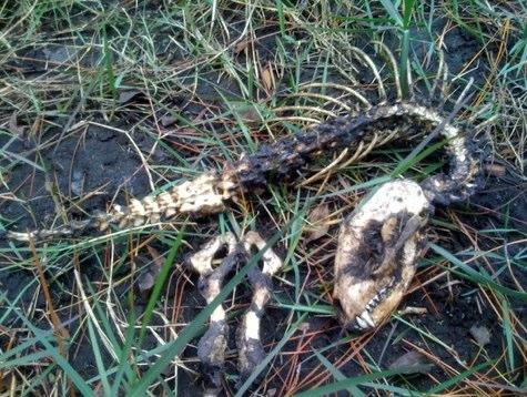Unidentified skeleton found on school campus