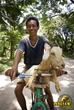Life is simple and mundane as a man transports his goat in Tuburan. Click on photo for a larger image.