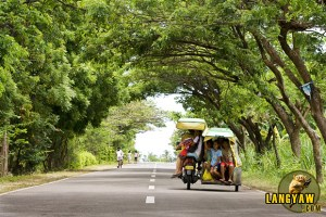The roads in southern Cebu are well paved and with less vehicles. In Asturias, trees form an arch along a section of the road.