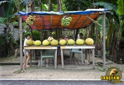 A fruit stall along the highway sells backyard produce at very cheap prices. Just imagine, a big ripe jackfruit, probably three kilos just costs 30 pesos.