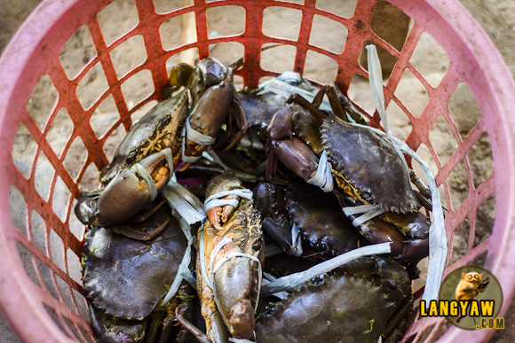 Pontevedra is the mud crab capital of Capiz. Here, on market day, expect to see buyers and sellers haggling for the best price.