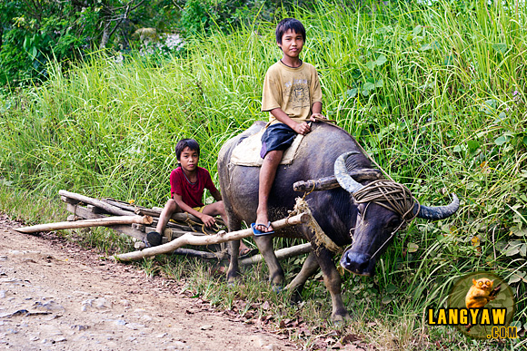 Children from farm duties on the way home