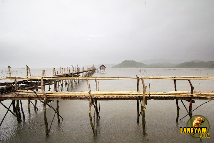 A slight drizzle over the bamboo foot bridge