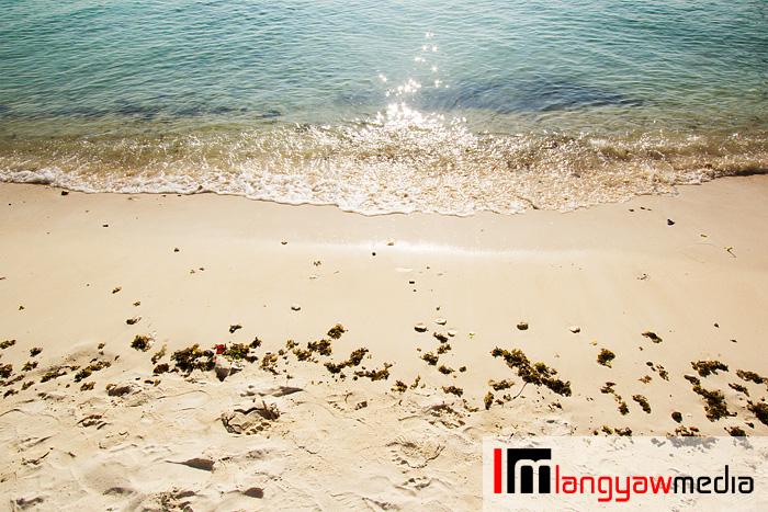 Seaweeds ashore