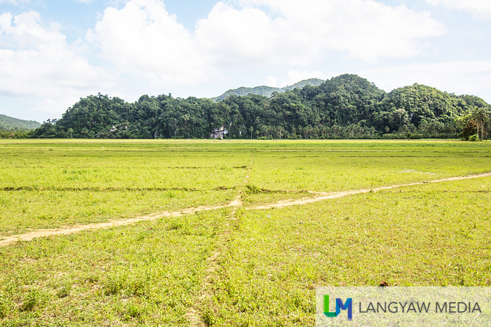 Rice fields with forested karst mountain formations in the background