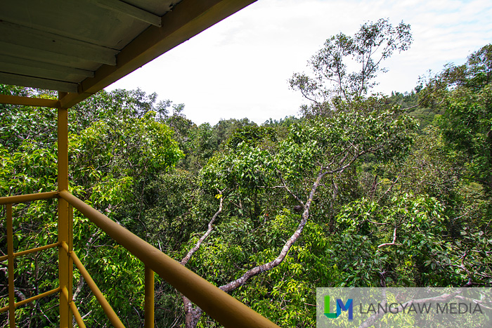 Atop the 120 ft treehouse with a great view of the canopy