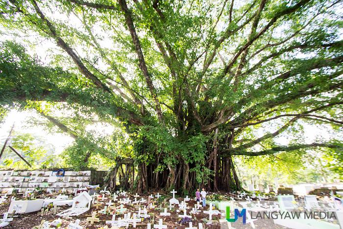 Jimenez balete tree
