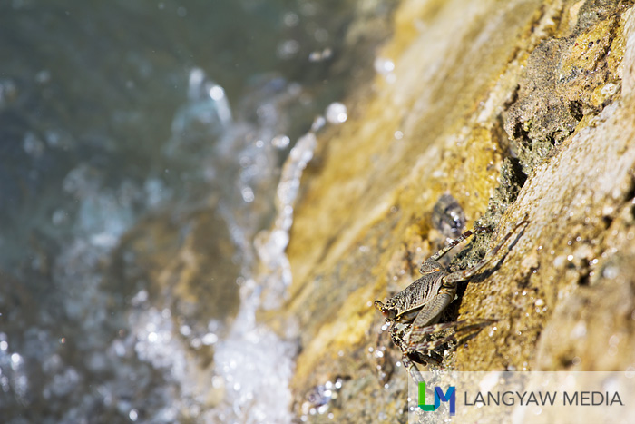 A beach denizen atop a rock. It's a small crab, by the way.
