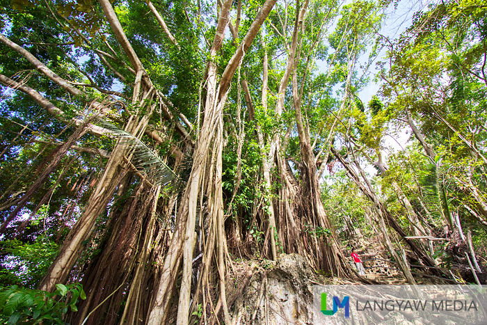 Have you seen the man in red? It gives you an idea of how big this balete is