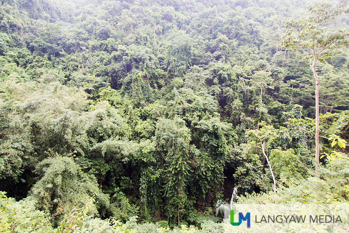 Forested area within the vicinity of Tumalog Falls in Oslob