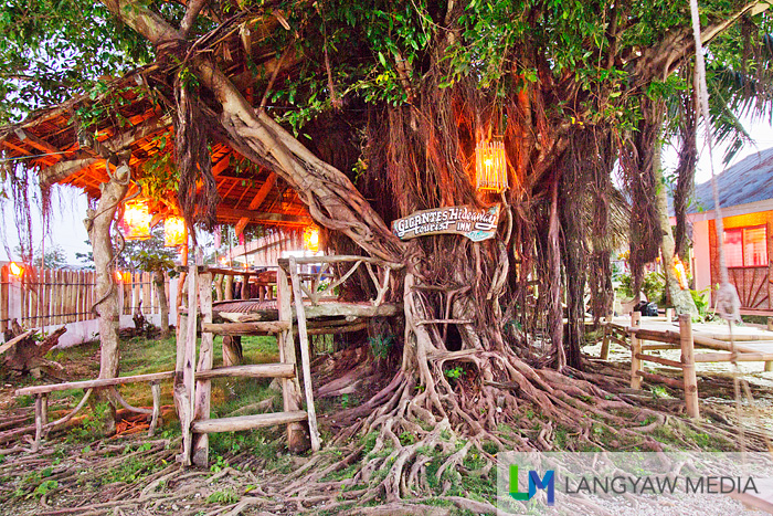 Gnarled roots gives it some appeal