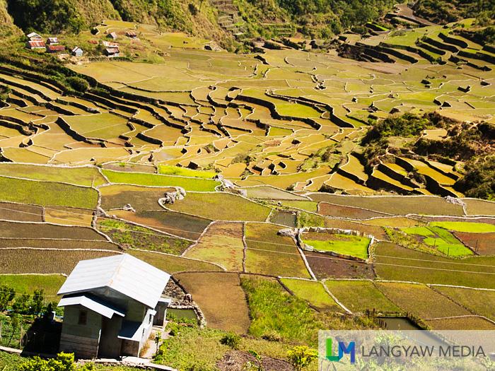 The beautiful rice terraces of Barangay Fidelisan