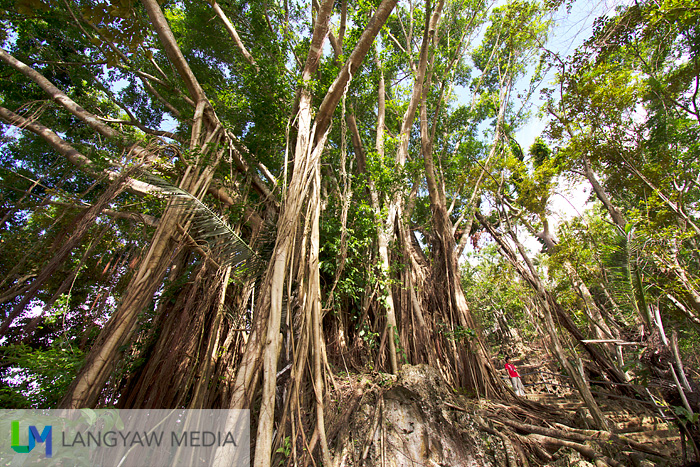 The giant banyan tree at Tigayon Hill has some interesting surprises as well