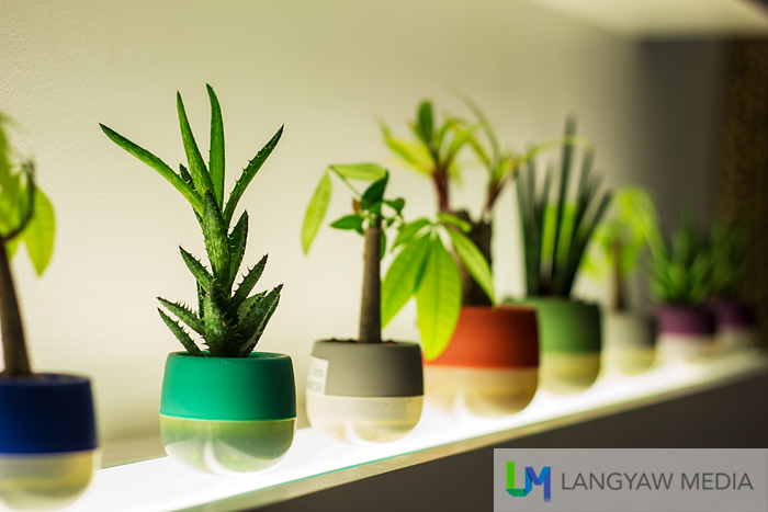 Potted plants as decor in lobby