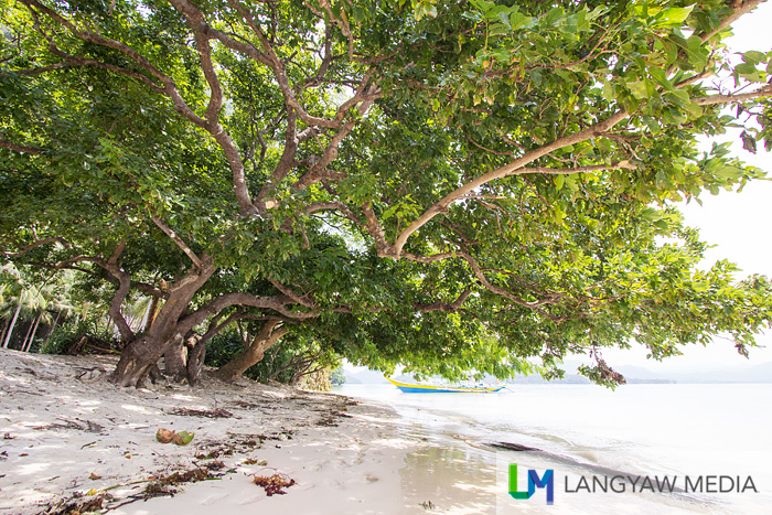 Under the canopy of a tree shades this part of the beach