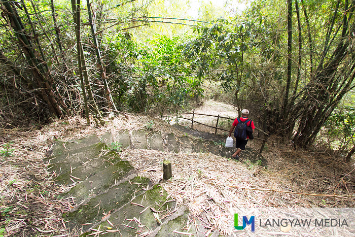 The trail is an easy hike with this portion a slow descent punctuated with bamboo foliage