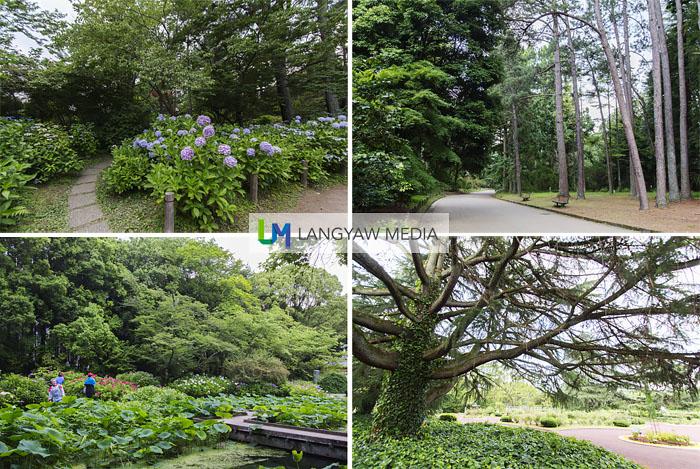 Around the botanical garden