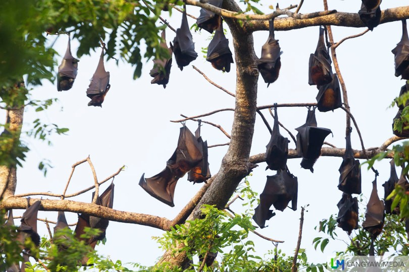 A real bat colony!