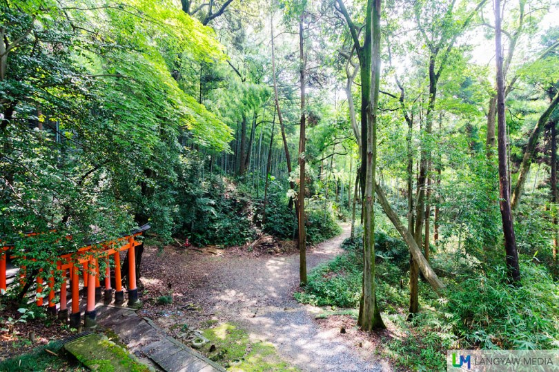 Fukumi Inari Shrine has many trails within the area and its a great place to hike