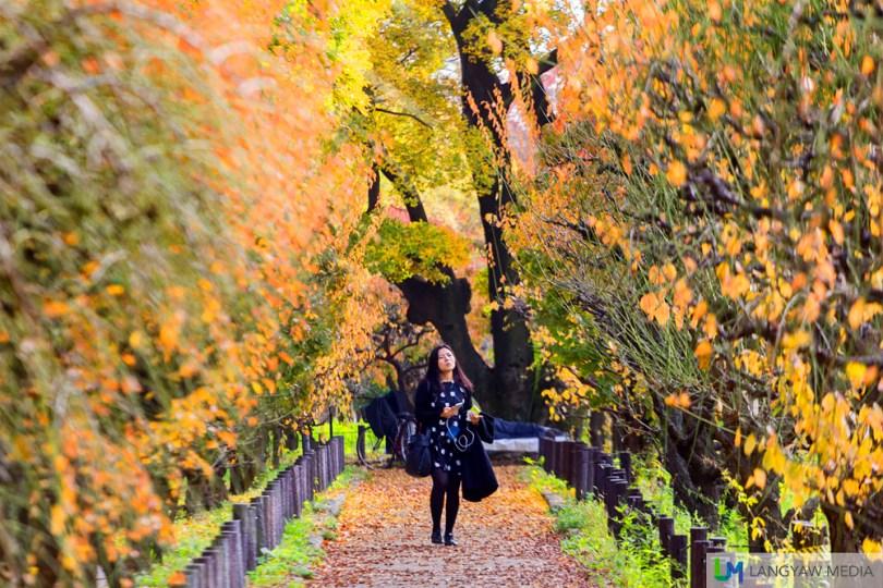 Osaka Castle in Autumn
