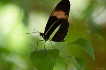That green line almost made this butterfly look like it had a gap in its wings