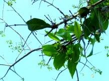 Fishing lure stuck in a tree.