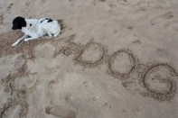 Patch the Dog, Tangalle Beach