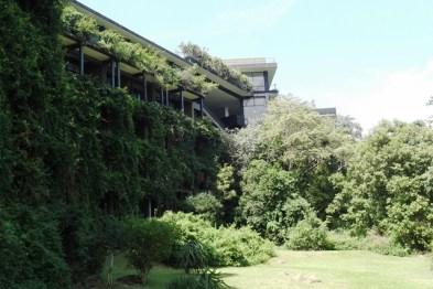 Hanging foliage, Kandalama