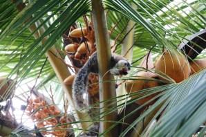 Giant squirrel, Anuradhapura