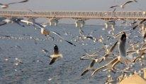 Seagulls on the Stand, Mawlemyine