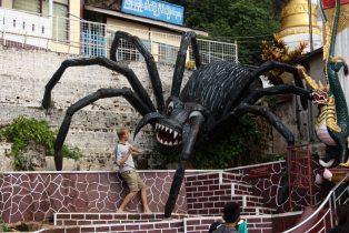 Evil spider, Pindiya
