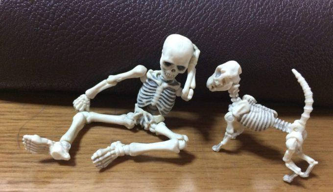 骸骨人形画像