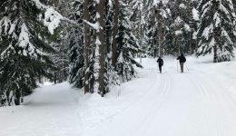 Le ski de fond en Norvège pour les débutants