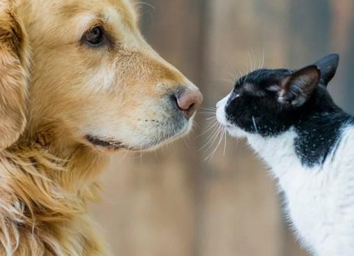 El servicio gratuito de castración de mascotas estará en zona norte