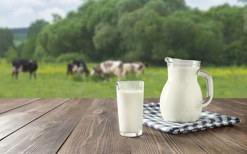 La leche entera ¿amiga o enemiga de la dieta?