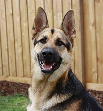 El Día Internacional del Perro