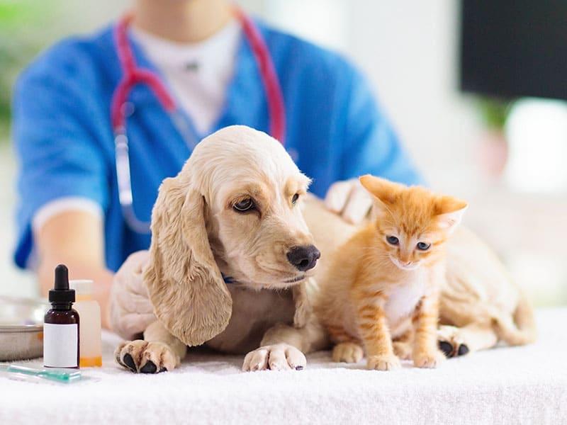 recomendaciones-para-prevenir-pulgas-y-garrapatas-en-mascotas-durante-el-verano