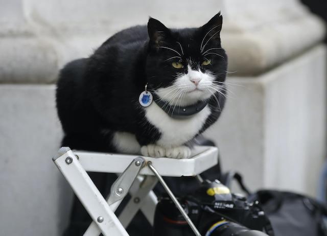Se jubila gato ratonero del Servicio Diplomático Británico
