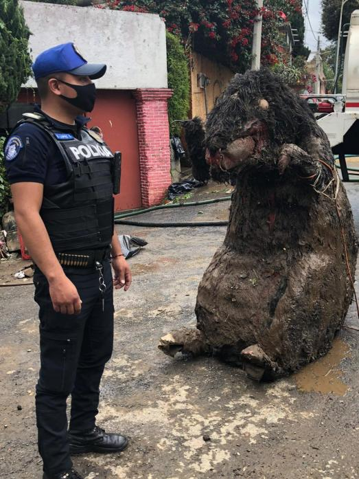 Policía CDMX rata gigante