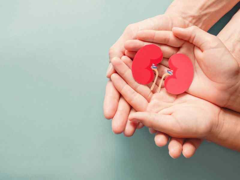 donante de órganos