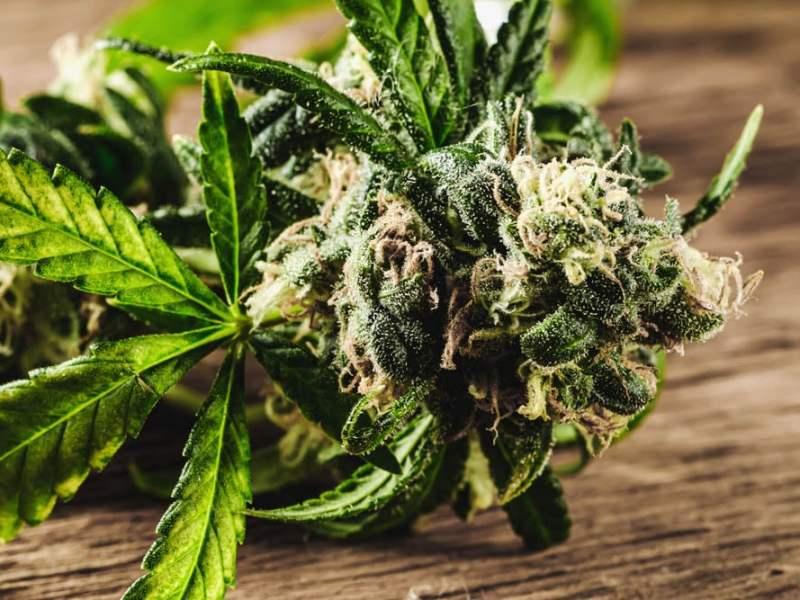 EEUU: 5 estados legalizan la marihuana para adultos
