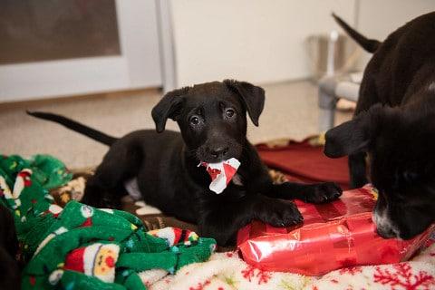consejos-para-mantener-a-las-mascotas-a-salvo-durante-las-navidades-en-tiempos-de-covid-19