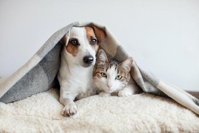¿Cómo detectar si tu mascota tiene cáncer?