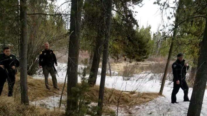 oso guía yellowstone